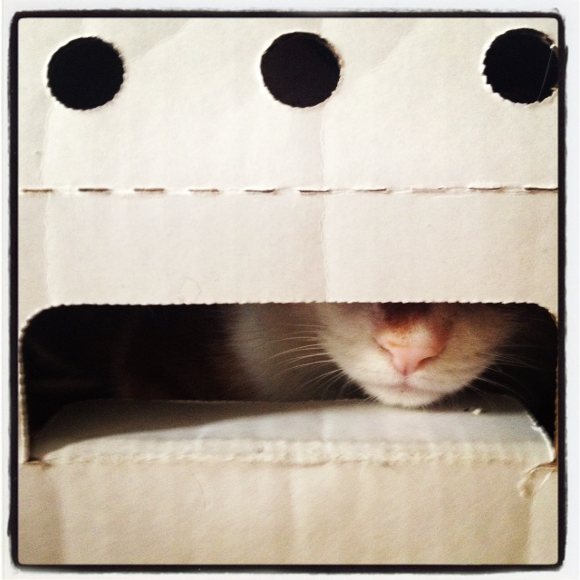 Cat in a box - Odin | DeSmitten