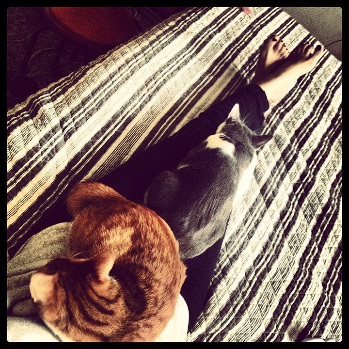 Cat Nap on my Lap | DeSmitten